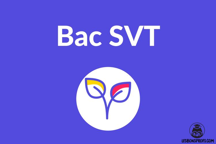comment réviser le bac SVT.png