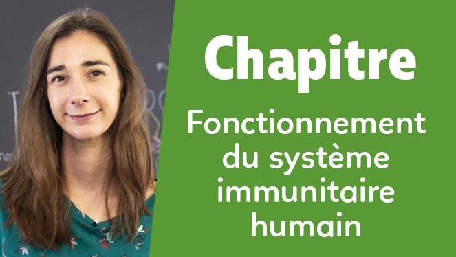 Fonctionnement du système immunitaire humain