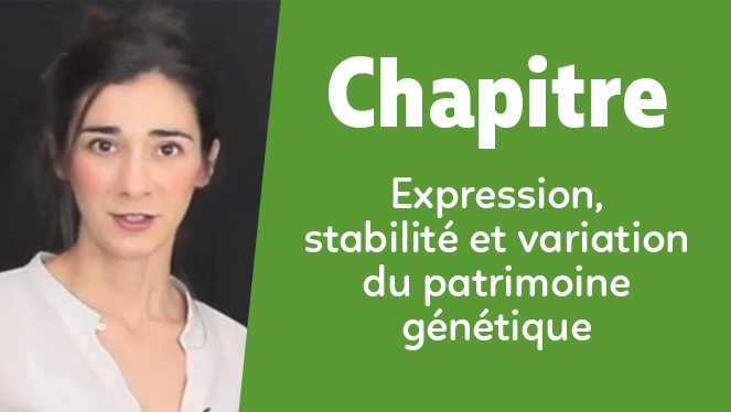 Expression, stabilité et variation du patrimoine génétique
