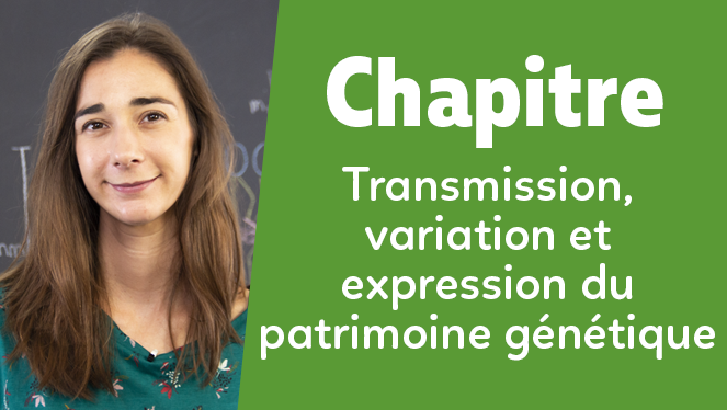 Transmission, variation et expression du patrimoine génétique