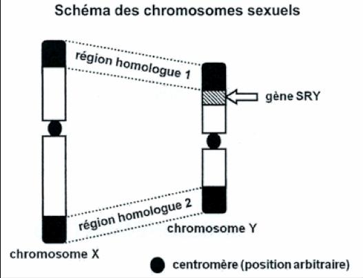 chromosome.png