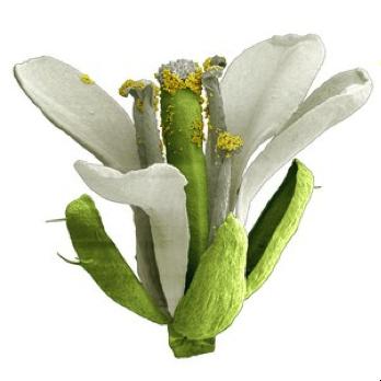 fleurs1.png
