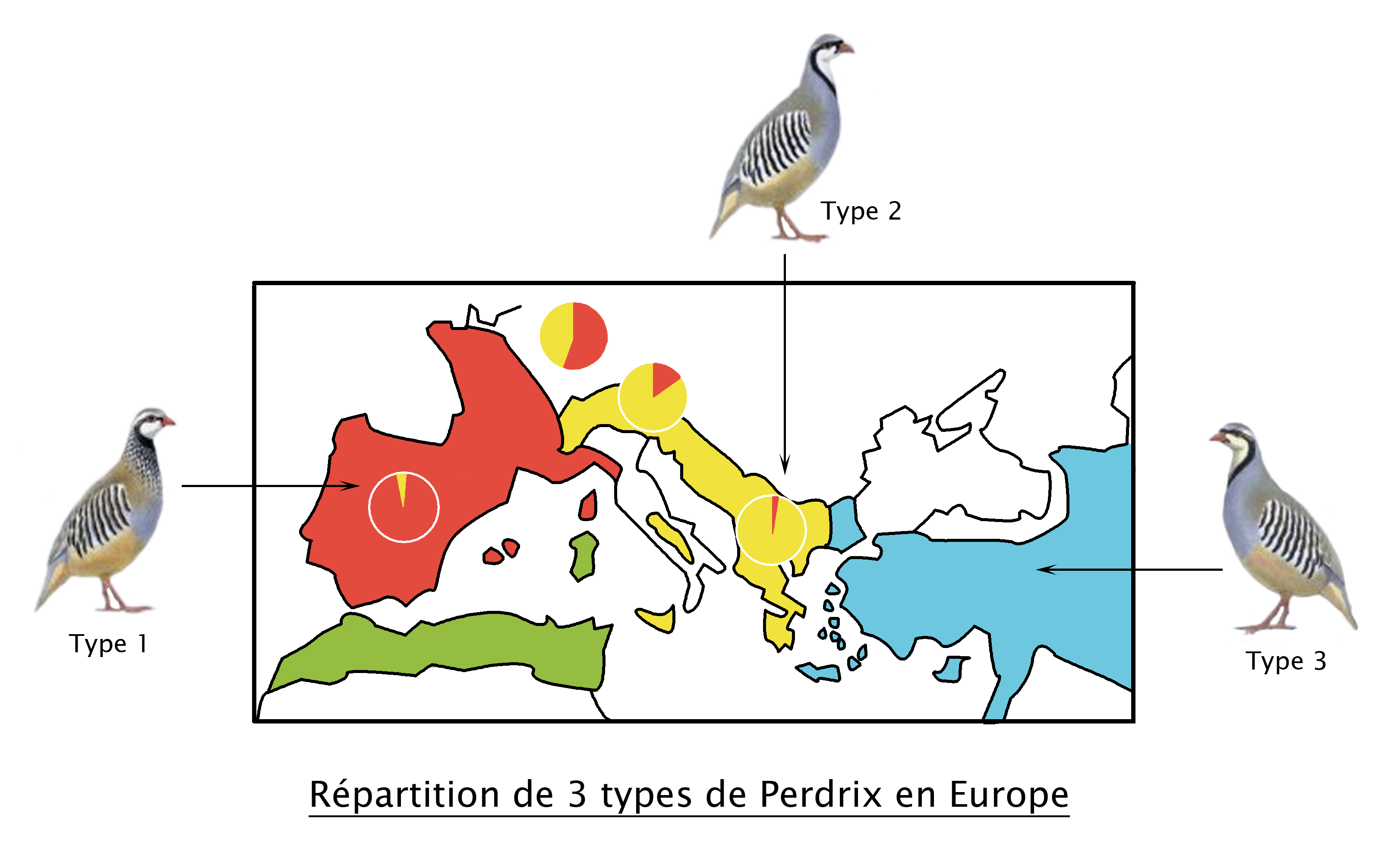repartition_de_3_types_de_perdrix.jpg