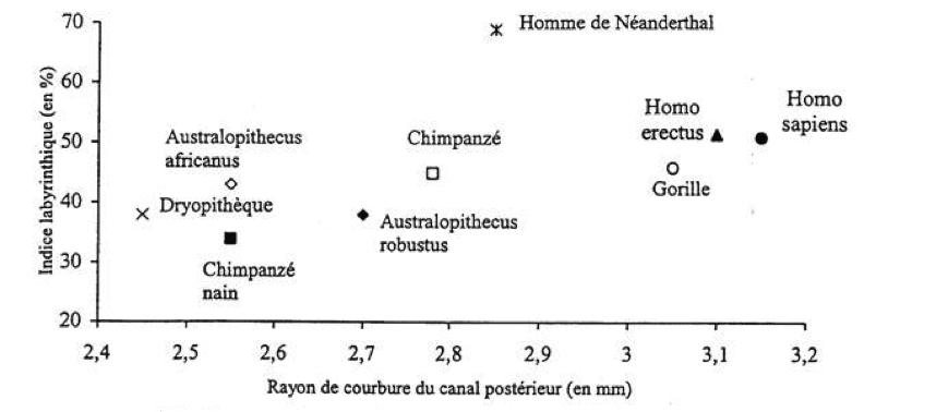 neanderthal1.png