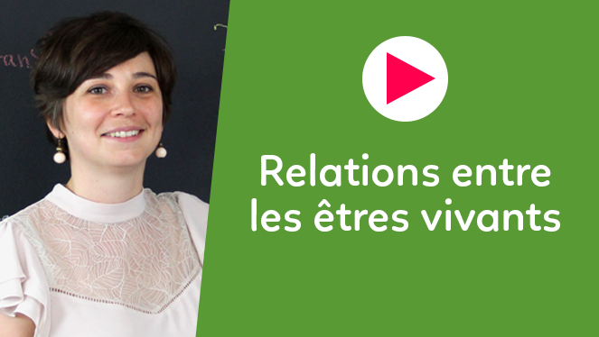 Relations entre les êtres vivants