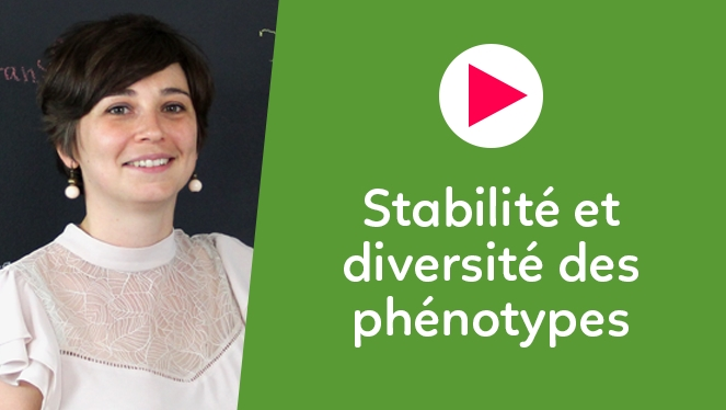 Stabilité et diversité des phénotypes