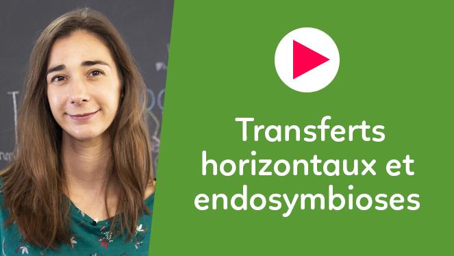 Transferts horizontaux et endosymbioses