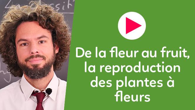 De la fleur au fruit, la reproduction des plantes à fleurs
