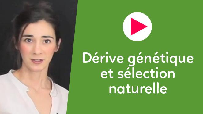 Dérive génétique et sélection naturelle