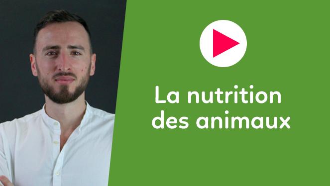 La nutrition des animaux
