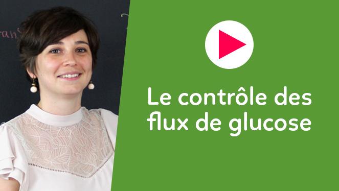 Le contrôle des flux de glucose