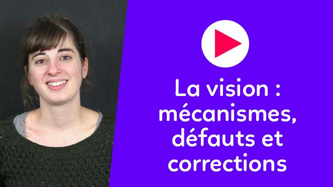 La vision : mécanismes, défauts et corrections