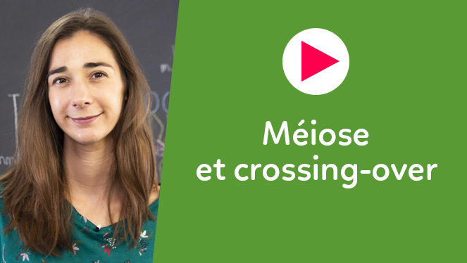 Méiose et crossing-over