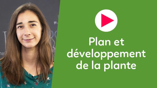 Plan et développement de la plante