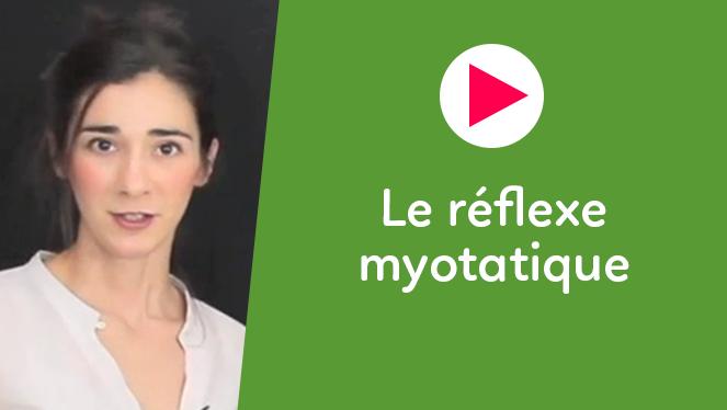 Le réflexe myotatique