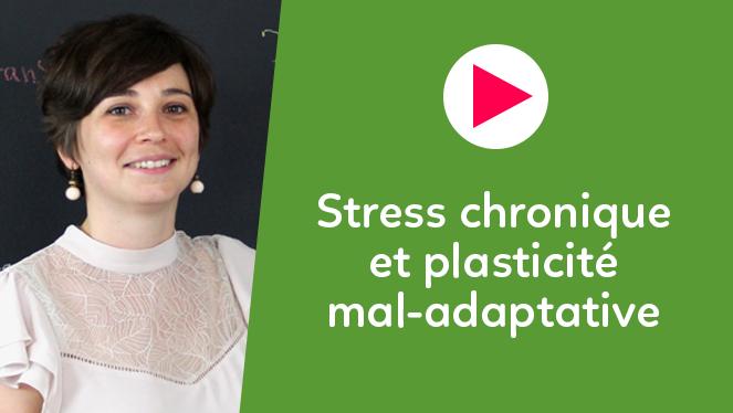 Stress chronique et plasticité mal-adaptative