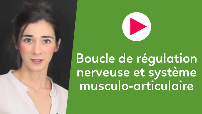 Boucle de régulation nerveuse et système musculo-articulaire