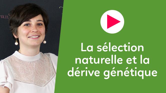 La sélection naturelle et la dérive génétique