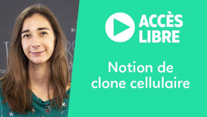 Notion de clone cellulaire