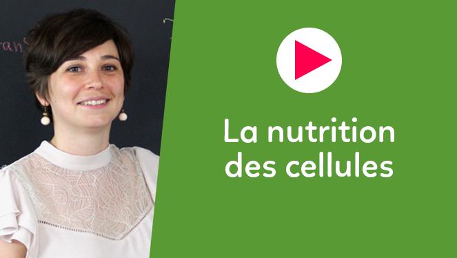 La nutrition des cellules