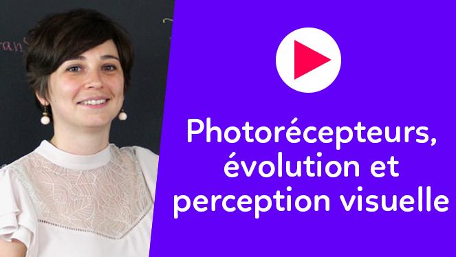 Photorécepteurs, évolution et perception visuelle