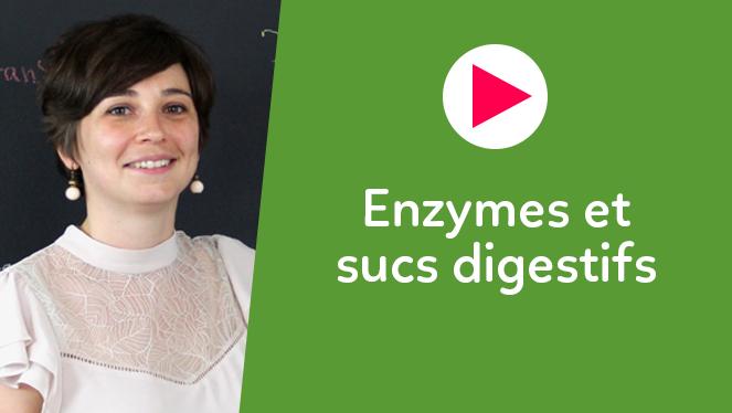 Enzymes et sucs digestifs
