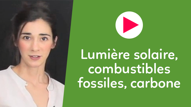 Lumière solaire, combustibles fossiles, carbone