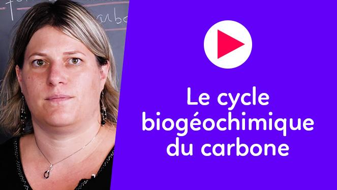 Le cycle biogéochimique du carbone